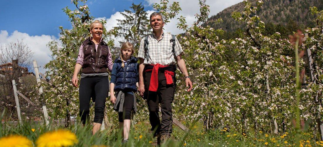 Die Apfelblüte signalisiert die Zeit zum Spazierengehen in Südtirol